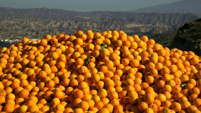 Вред для десен: апельсины