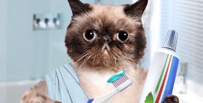Избавиться от кровоточивости десен поможет ежедневная качественная чистка зубов